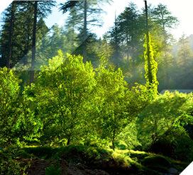 Plan de transición de la certificación proyectos forestales
